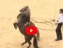 espectaculo caballos hoy leon