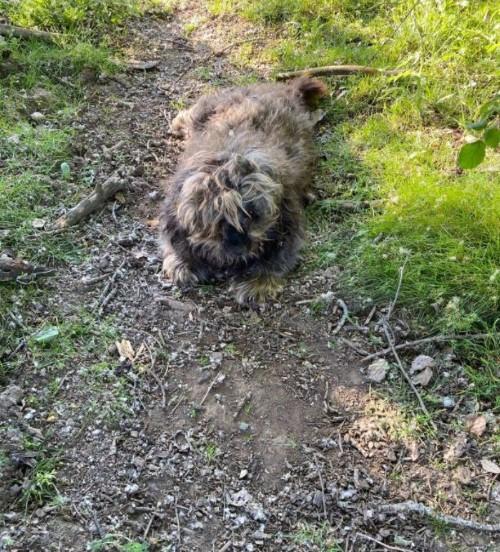 perro abandonado leon
