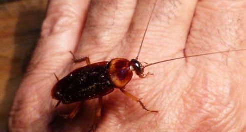 rescata cucaracha veterinario