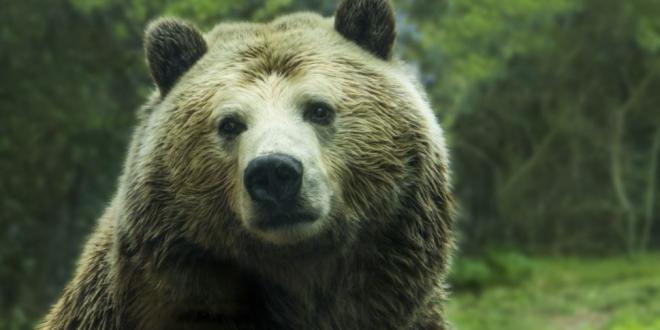 telefono pueblo leon oso-Digital de León