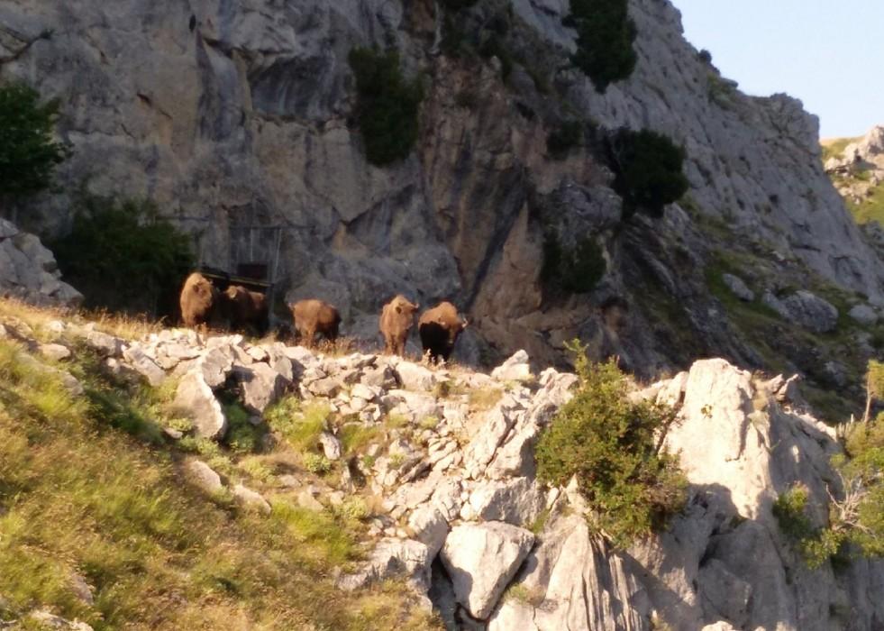 sendas arnua safari bisontes leon-Digital de León