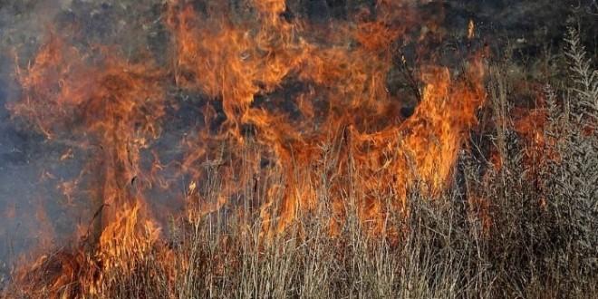 5 incendios leon 17 agosto 2021-Digital de León