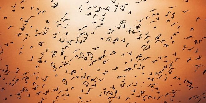 aves numero seres humanos-Digital de León