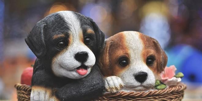 estudio perros mentir-Digital de León