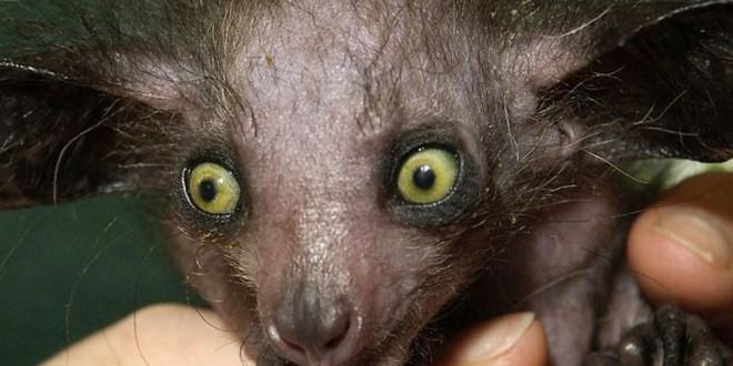 animales raros agosto 2021-Digital de León