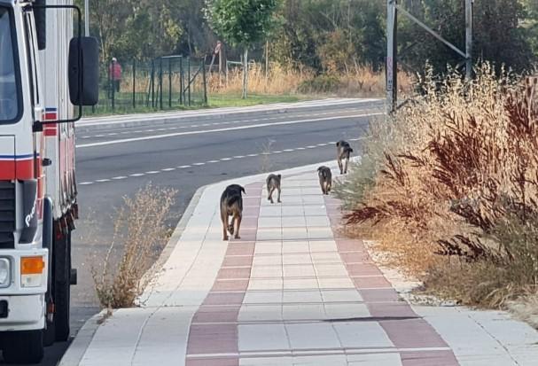 perros abandonados villaobispo-Digital de León