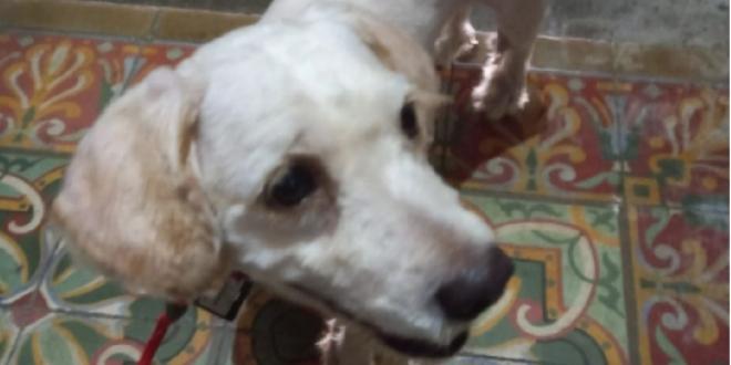 boogie perro la palma-Digital de León