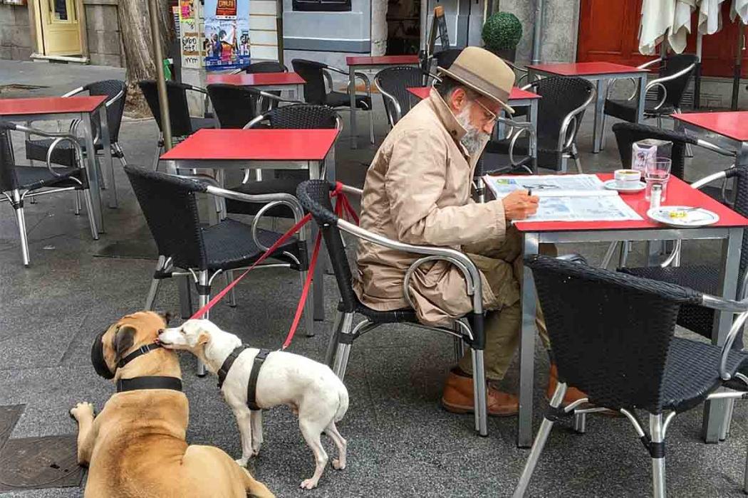mascotas seres que sienten-Digital de León